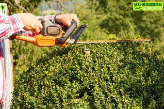 Die richtigen Heckenpflanzen für den eigenen Garten